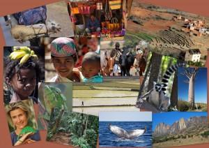 Feedback_Madagaskar Reise PRIORI
