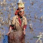 Galerie: Fischerinnen Hochland Pirna Fisch Madagaskar