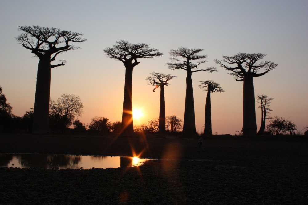 Madagaskar Baobab Allee Westen