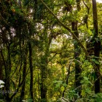 Madagaskar Norden Montagne d'Ambre Nationalpark PRIORI Reisen