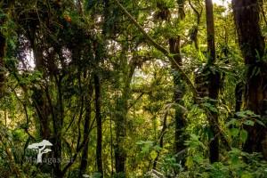 Galerie: Madagaskar Norden Montagne d'Ambre Nationalpark PRIORI Reisen