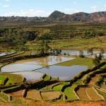 Galerie: Madagaskar Reisfelder Diego Ambilobe