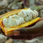 Madagaskar Kakaoplantage Ambanja