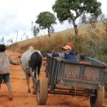 Projektreisen: Zebu und Karren in Madagaskar