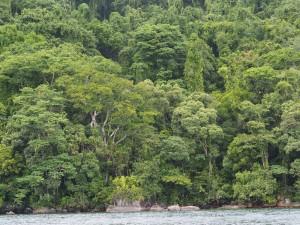 Im Auge des Waldes Masoala - Madagaskar-Masoala-Regenwald