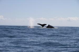 Madagaskar von allen Seiten _Madagaskar-Wale