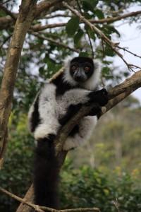 Viele Wassertropfen ergeben einen Fluss-Madagaskar_Lemur_PRIORI-Reisen_MG100