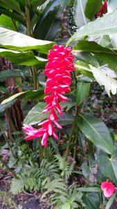 Kreolische Farben: Blume La Réunion