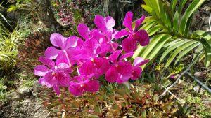 Kreolische Farben: Flora auf La Réunion