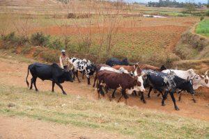 Landwirtschaft Madagaskar