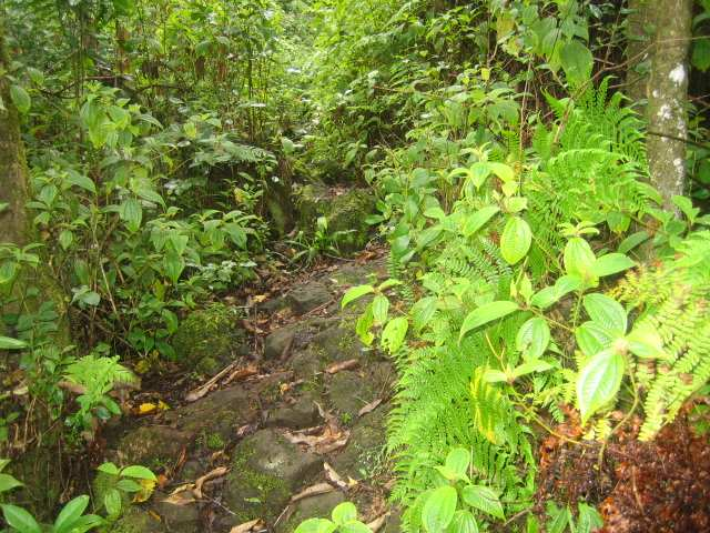 Abstieg Karthala Trekking Komoren PRIORI
