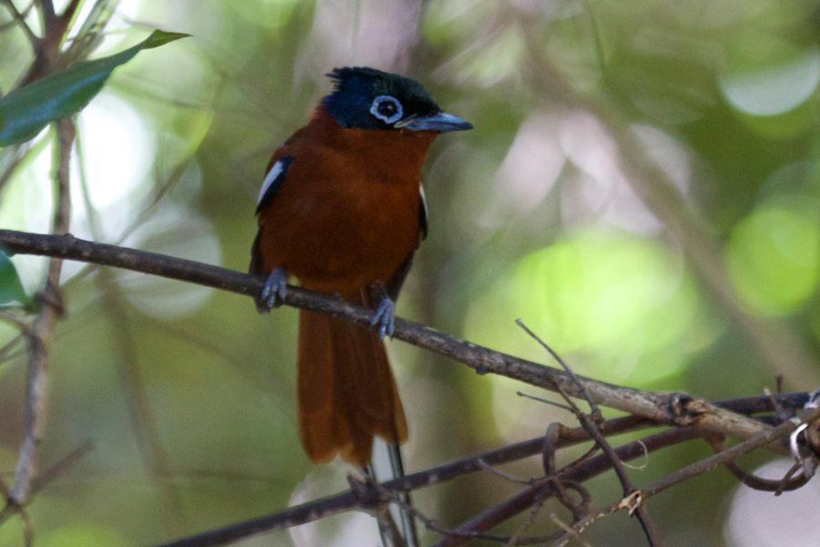 Karthala Trekking - Teil 5: Komoren und Madagaskar-Montagne-d'Ambre