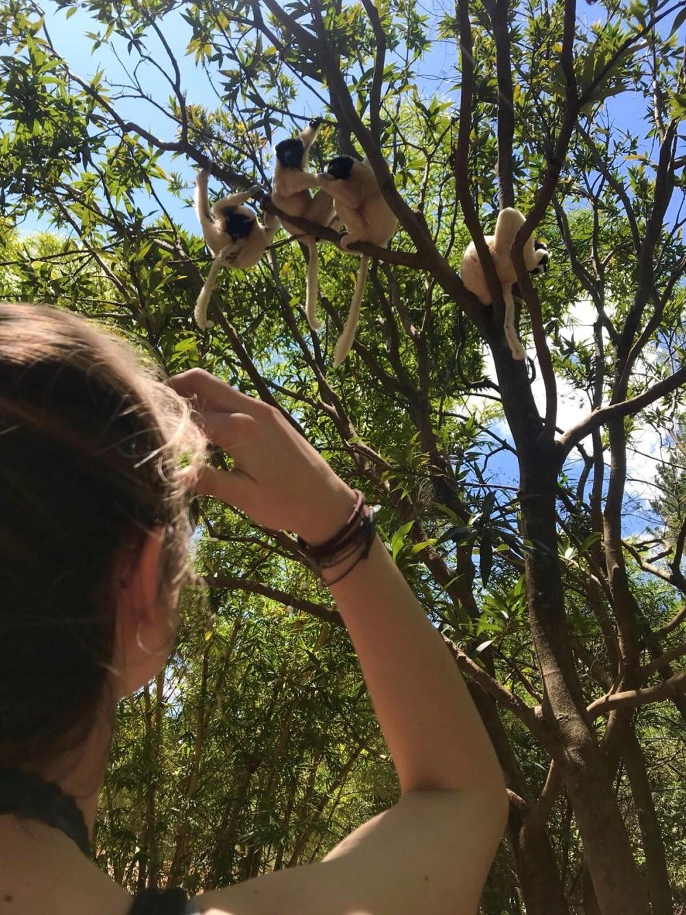 Unvergessliche Reise: Flauschige Begleiter sind die Lemuren Madagaskars © PREVIDOLI