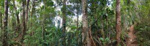 Camp Marojejy: Waldpanorama Marojejy