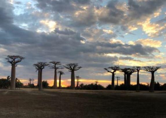 Madagaskar 2018: Baobab-Allee