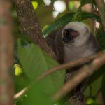 Freunde Masoala Reise 2019 - Lemur NP Masoala @Martin Bauert