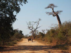 Slow Madagaskar - Wandern MG134