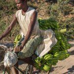 Eindrucksvolle Tage in Madagaskar: Bananentransport in Madagaskar © Achim Möbes