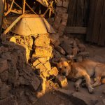 Eindrucksvolle Tage in Madagaskar: Hund in Madagaskar © Achim Möbes