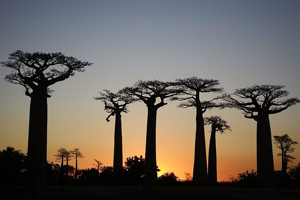 Madagaskar Kleingruppenreisen 2019: Abenteuerreise nach Madagaskar: Baobaballee in der Abenddämmerung