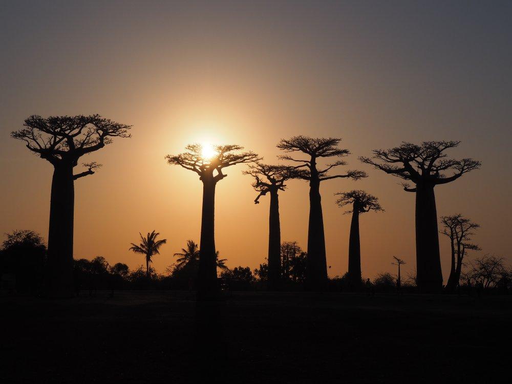 Infoabend: Madagaskarreise war sensationell - Baobaballee