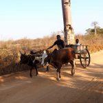 Madagaskarreise war sensationell - Zebukarren