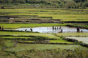 Abenteuerreise nach Madagaskar: Reisfelder bei Antsirabe