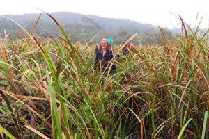Trekking zum Chute de Sakaleona: Knietief im Sumpf