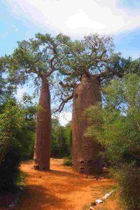 Baobabs Reise in den Südwesten Madagaskars