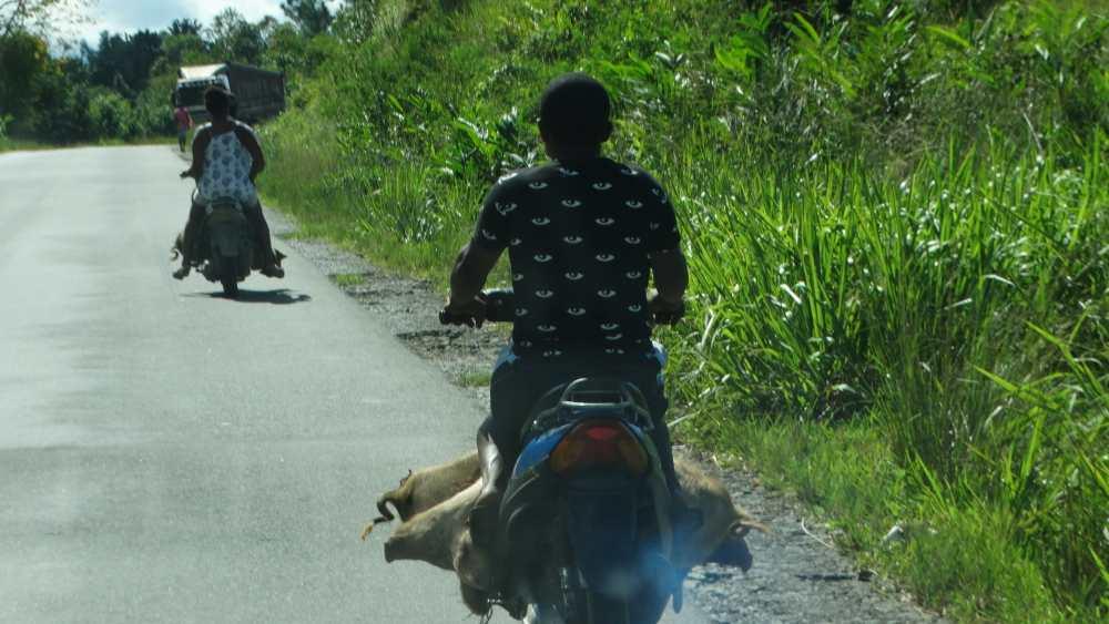 Unser Madagaskar Abenteuer: Besondere Transporte