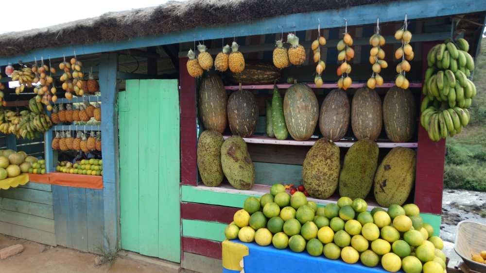 Unser Madagaskar Abenteuer: Bunte Fruchtstände überall