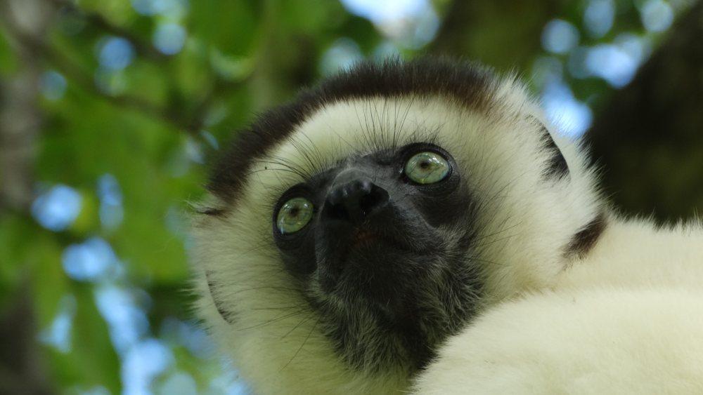 Unser Madagaskar Abenteuer: Lemuren in den Nationalparks