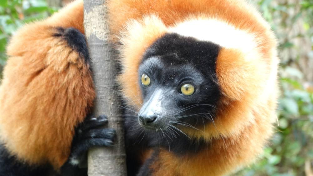 Unser Madagaskar Abenteuer: Lemurensichtung in Madagaskar