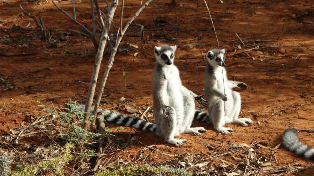 Unser Madagaskar Abenteuer: Sonnenbaden à la Lemur