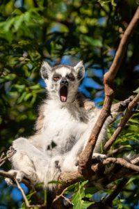 Madagaskar ein Land mit vielen Facetten: Flora und Fauna