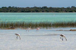 Madagaskar ein Land mit vielen Facetten: Flora und Fauna in Madagaskar