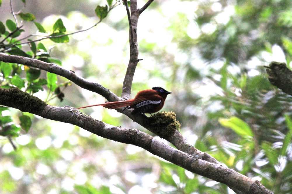 """Das Schutzgebiet """"Harmonische Landschaft"""" des Waldkorridors von Bongolava"""