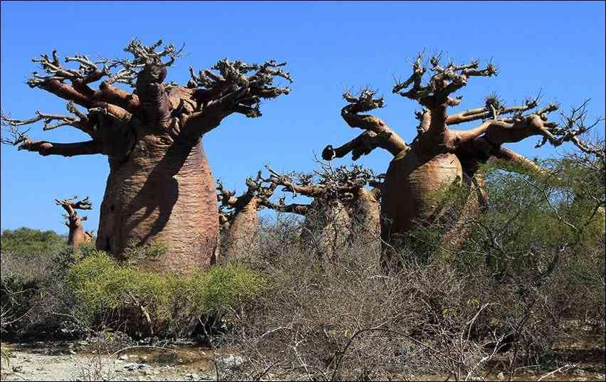 Kirindy-Mitea Nationalpark