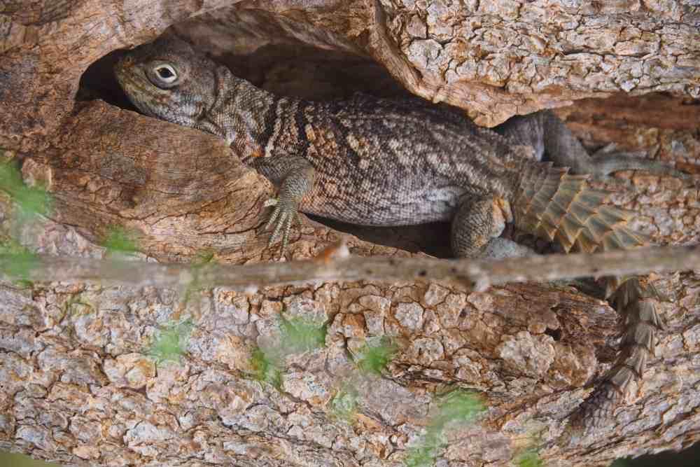 Sahamalaza Nationalpark