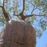 Tsimanampetsotsa Nationalpark