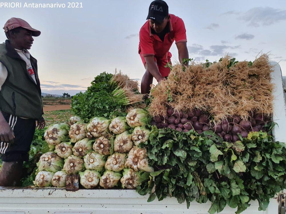 Gemüsebauern Madagaskar